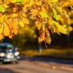 Fall Car Care for Caregivers